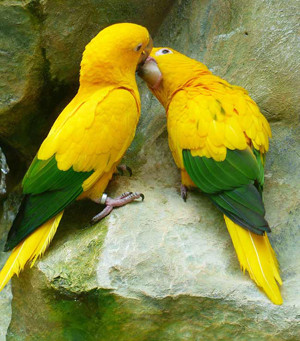 Parrots are So Much More Than Beautiful