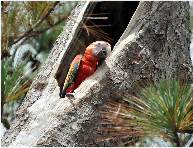 Child Protection Services for Parrots | One Earth Conservation