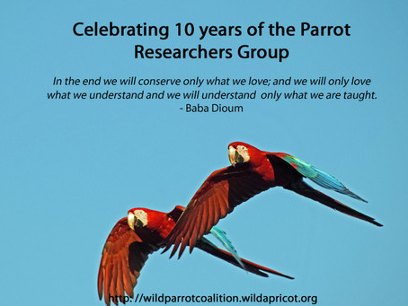 Parrot Researchers Group: A path to understanding, conservation, and love