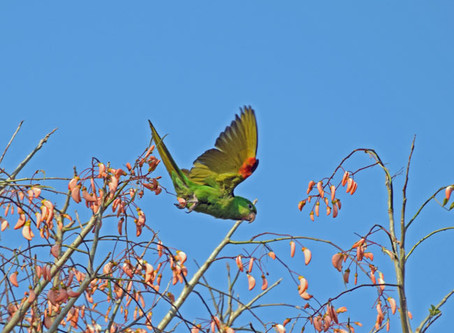 Surveying Parrots, Dreams, and Parks