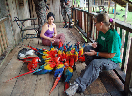 Parrots on Organizational Boards