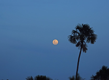 Moon Rising Over Macaws in Guyana