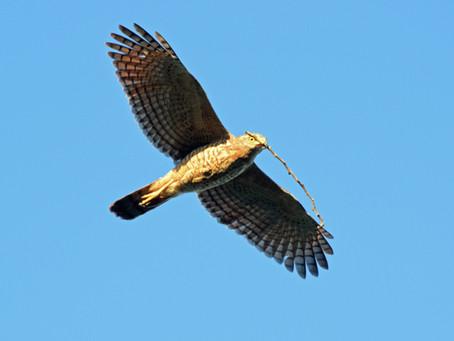 4 X 4 Parrot Conservation