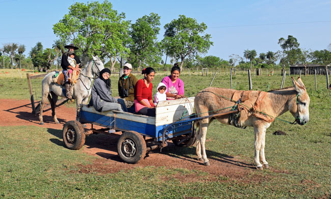 Donkey cart in Paraguay