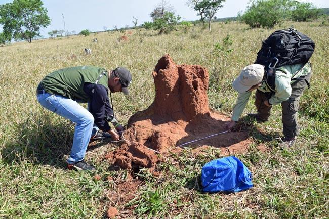 Measuring Termiteria