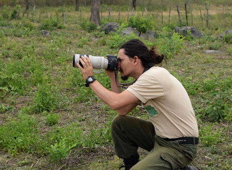Mountains of Hope for Parrots in Paraguay