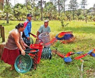 Liberating macaws.jpg