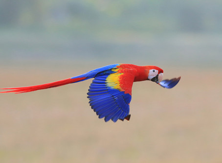 Burning Love: A Parrot Shows How to Put Out Fires of Human Desire