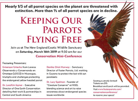 How To Keep Parrots Flying Free