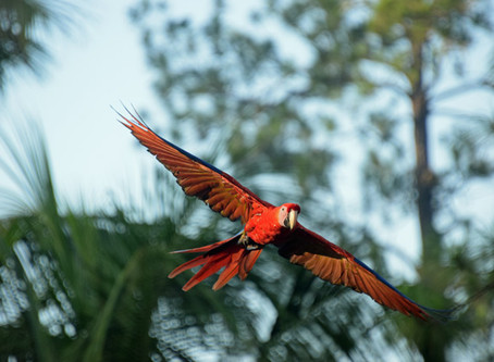 Macaw Children Separated at the Border
