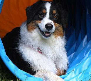 Hundeschule Leopolder, Golling, Kuchl, Tina, Beratung vor der Anschaffung eines Hundes
