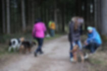 Hundeschule Leopolder, Golling, Kuchl, Tina, Social Walks
