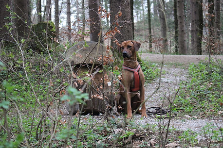 Hundeschule Leopolder, Golling, Kuchl, Tina, Einzeltraining