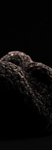 truffle_v01.jpg