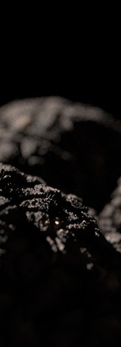 truffle_closeUp_v01.jpg