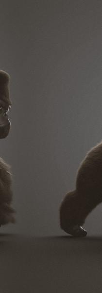 gorilla-studio-2.jpg