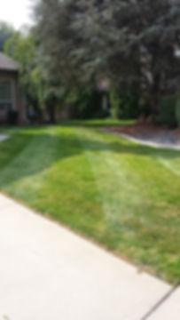 fletcher lawn 1.jpg