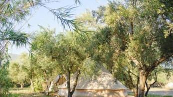 Tent onder de olijfbomen