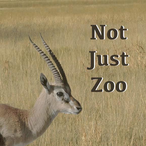 Not Just Zoo – 重新認識動物、修復人與自然關係的動物園