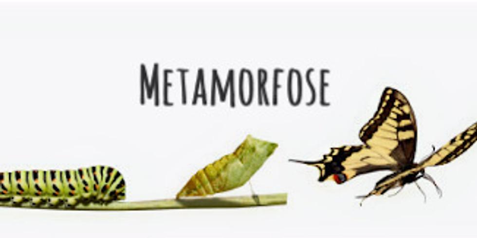 Workshop Metamorfose Massage