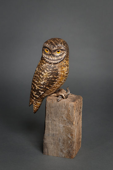 LITTLE OWL WITH SNAKE
