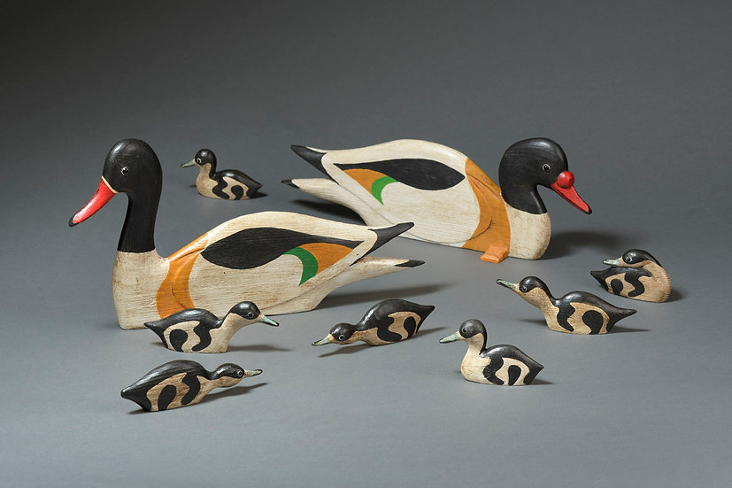 SHELDUCK FAMILY