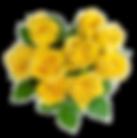yellow-rose.png