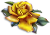 Beautiful_Yellow_Rose_Clipart.png