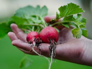 APRIL VIBES: Preparing a new harvest.