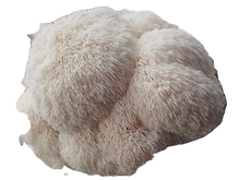 benefits-of-lions-mane-mushrooms-09_edit
