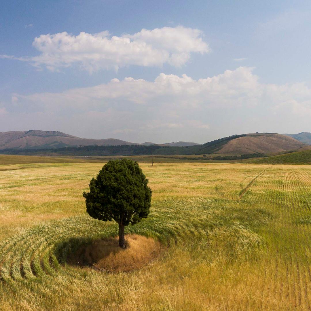 Lone Tree, Idaho