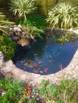 Willingdon Pond clean
