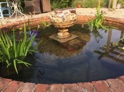 Iris pond 2