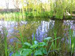 Swim-pond (After clean-up)