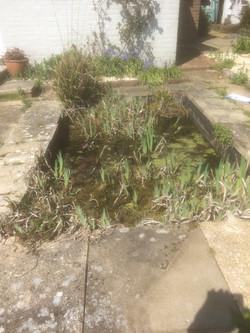 Seaford Pond