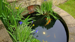 Koi pond in Uckfield