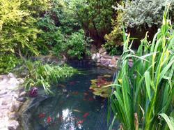 Eastbourne pond clean