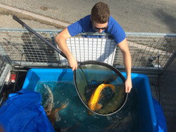 Fish re-stocking