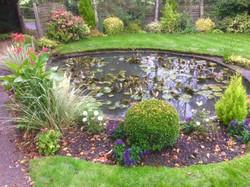 Ringmer lily pond