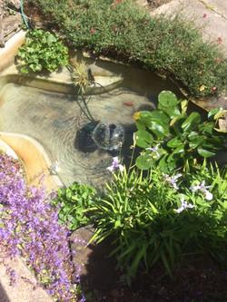 Eastbourne pond 2