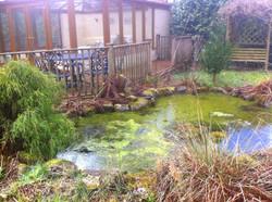 Nature pond before renovation