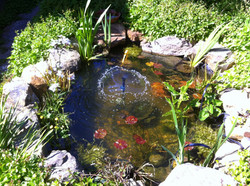A small nature pond