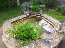 Eastbourne pond