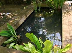Heathfield raised pond