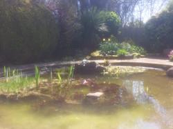 Seaford nature pond