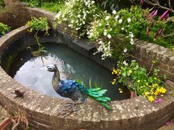 Fairlight pond- afterwards