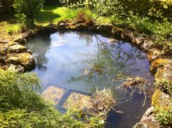 Nature pond- after renovation