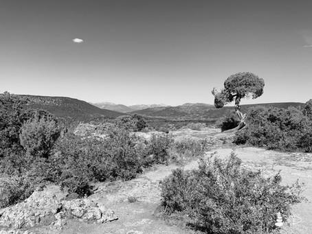 Western Shadows Gallery | Utah Juniper