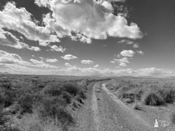 Western Shadows Gallery   Desert Roa