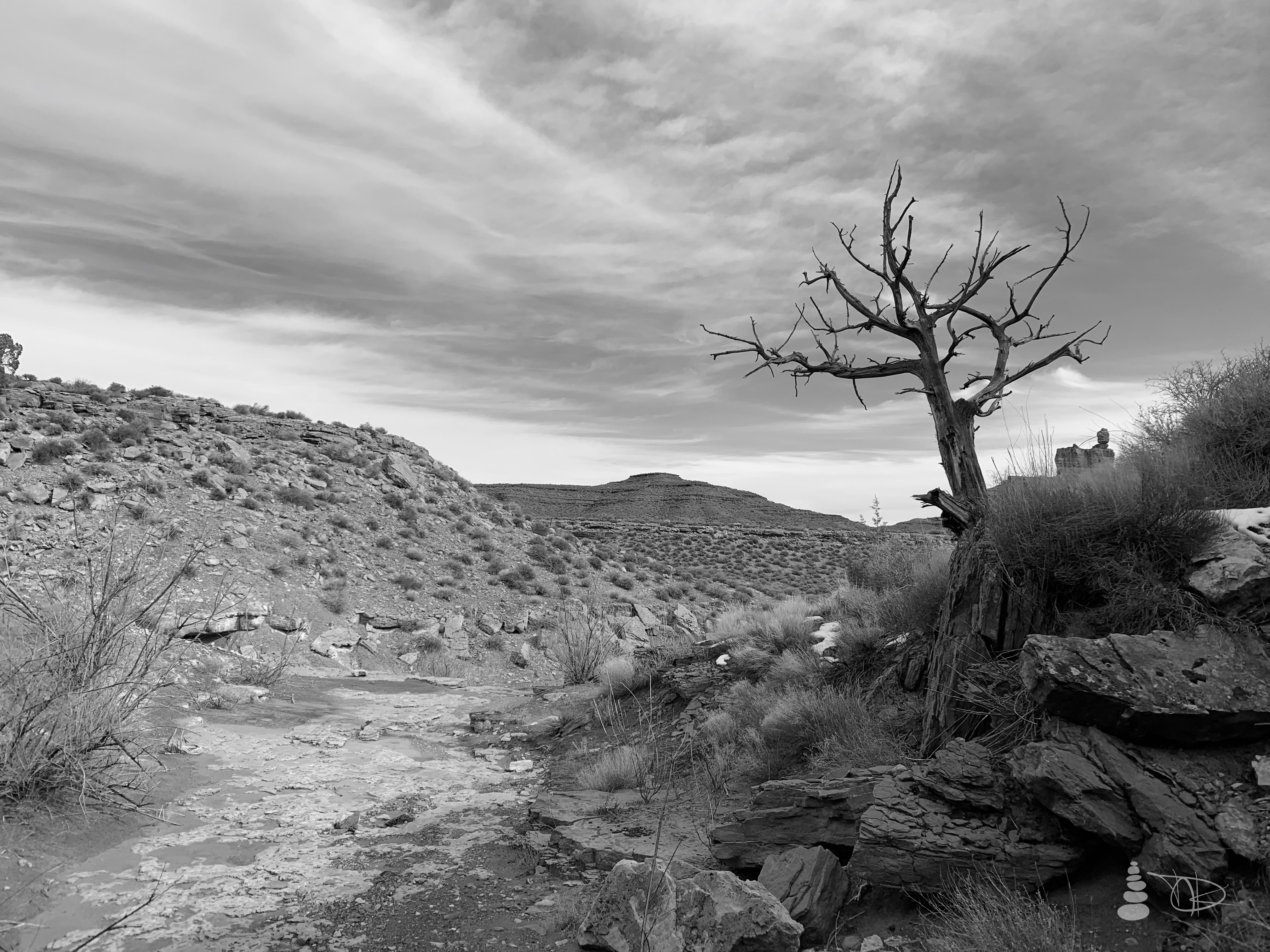 Western Shadows Gallery | Desert Tre